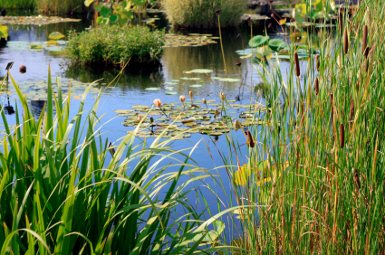 Slimbridge Wetlands Centre: Senior Interpretation Designer