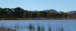 wildlife refuge water birds