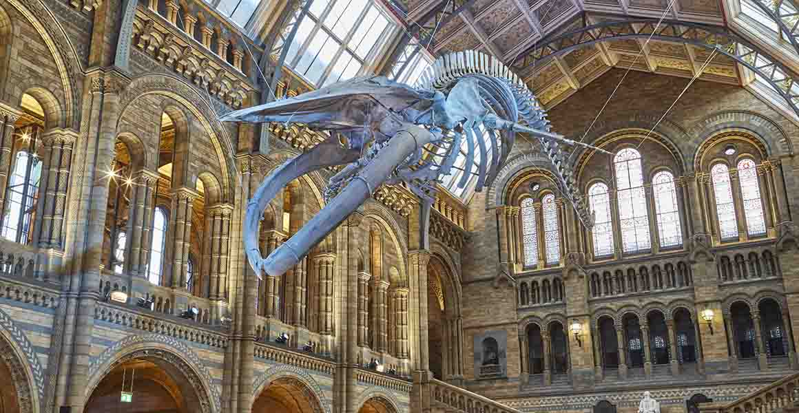 Natural History Museum: Brand Strategy and Identity (2 Lots)